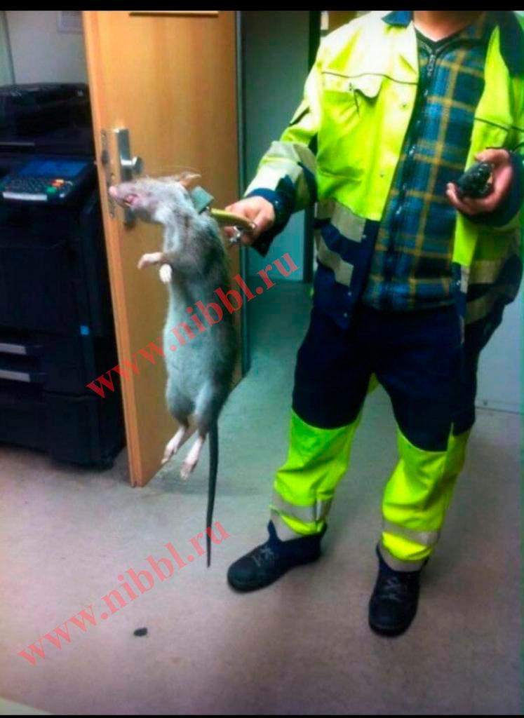 крысы монстры в Москве в метро